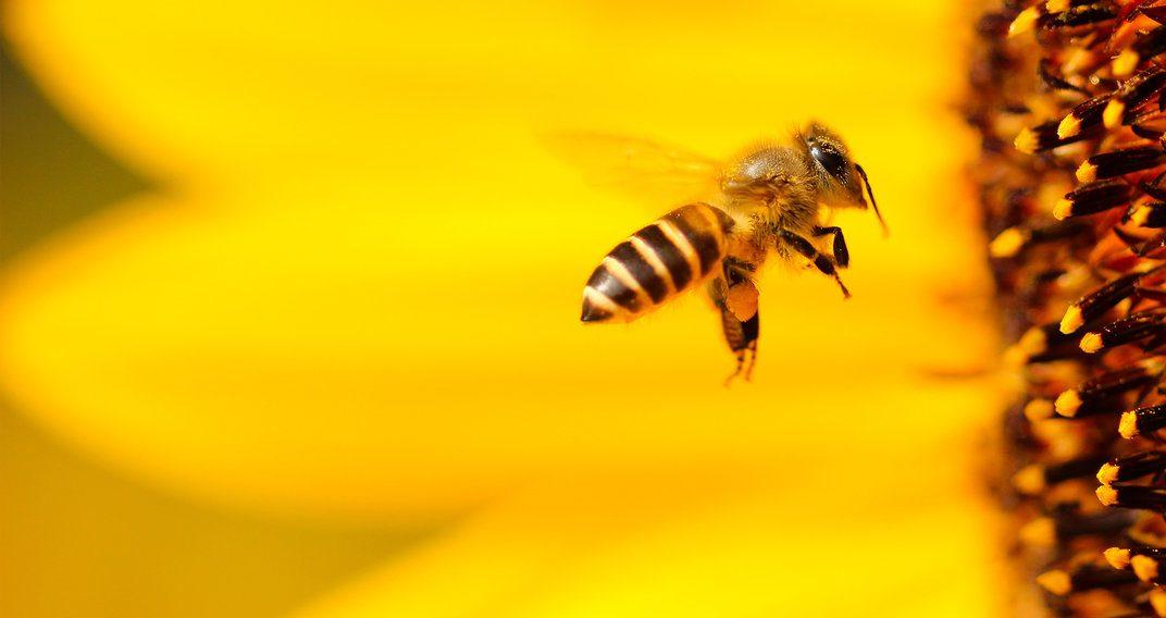 BEEcosystem lance la ruche à installer dans son salon