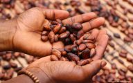 cacao-freres-lauzea