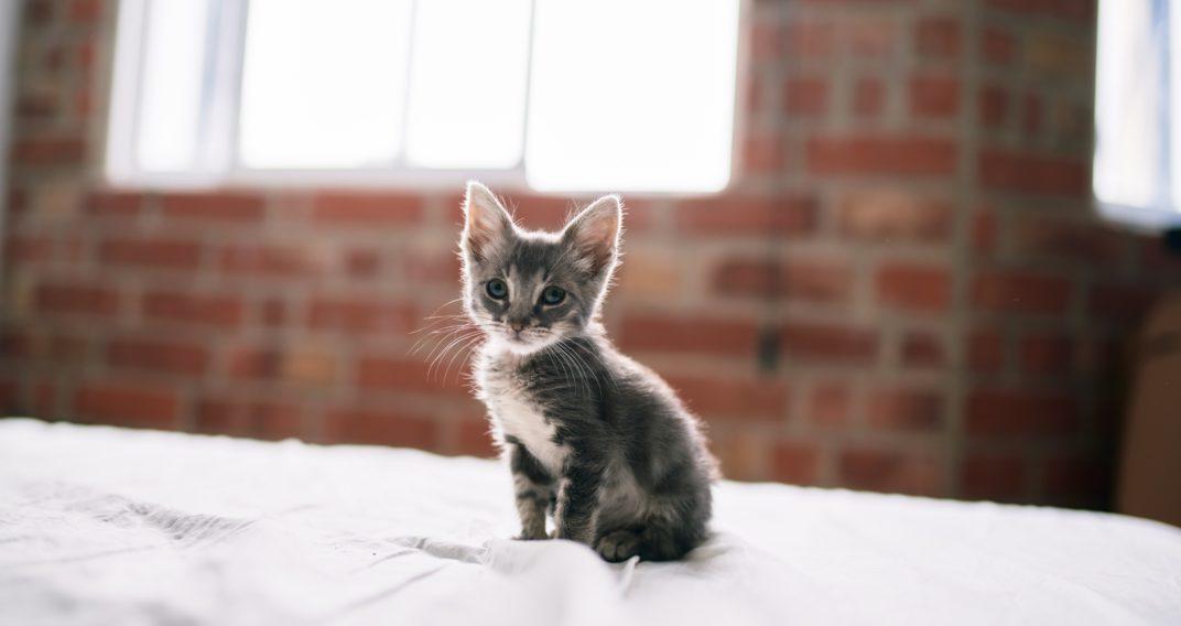 petit chat prix littéraire goncourt animaux